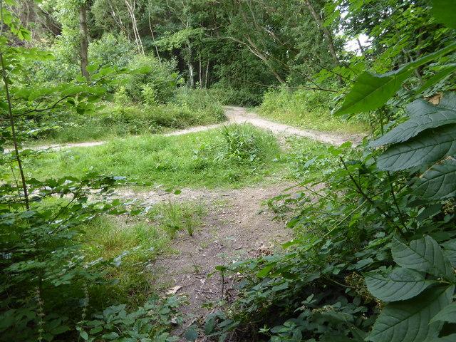 London Countryway in Surrey (12)