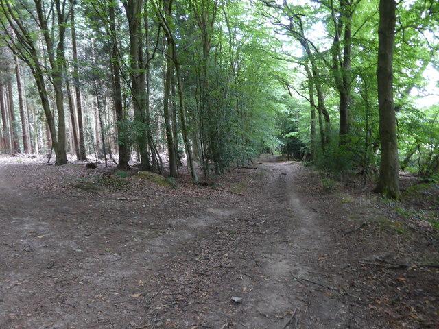 London Countryway in Surrey (15)