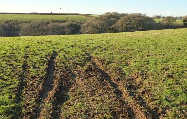 Field west of Penrose