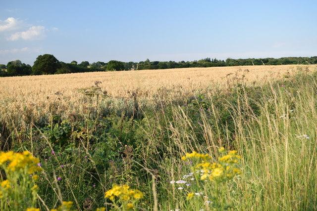 Field beside Maldon Road