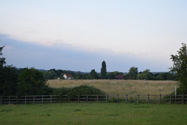 Fields near Margaretting Tye