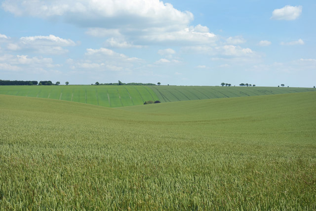 Crops and Sky
