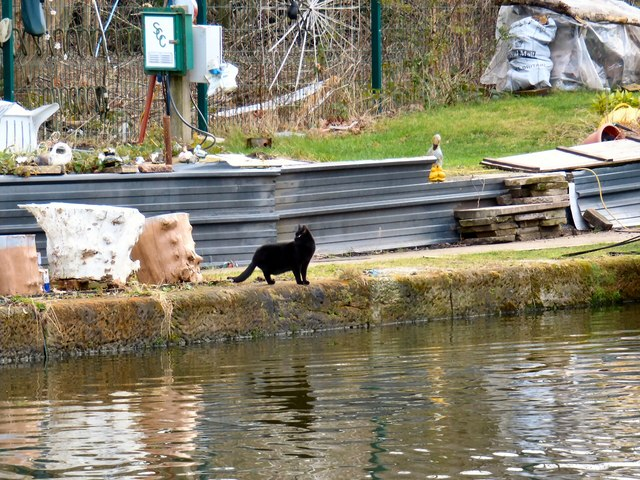 A canalside cat