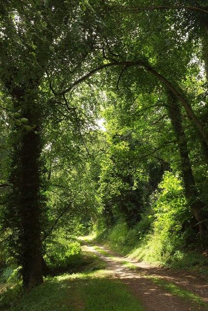 Carriage drive, Ugbrooke Park