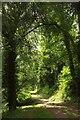 SX8778 : Carriage drive, Ugbrooke Park by Derek Harper
