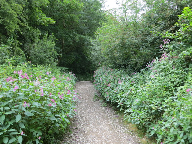 Footpath from Wood Lane to Post Hill Leeds Nature Area