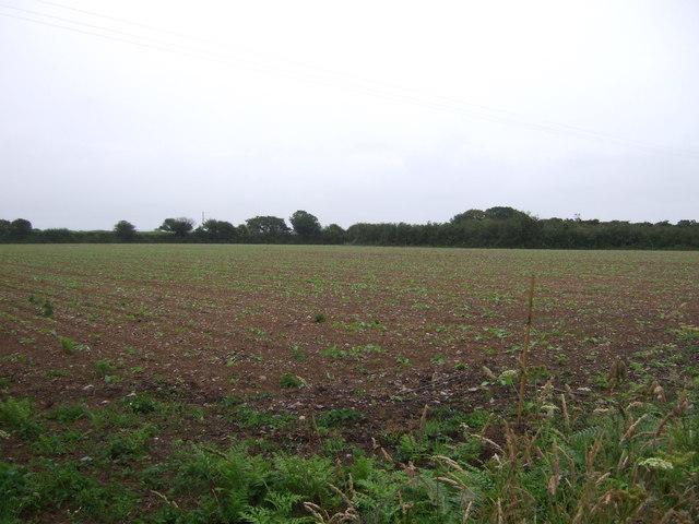 Young crop field of Praze Road (B3280)
