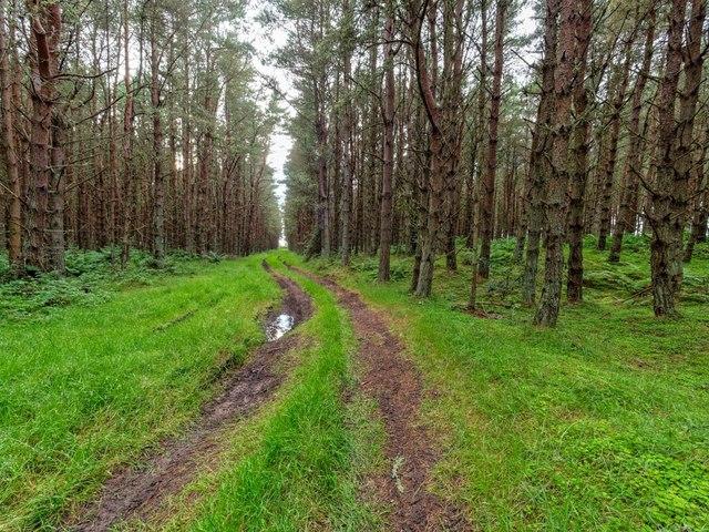 Carse Wood