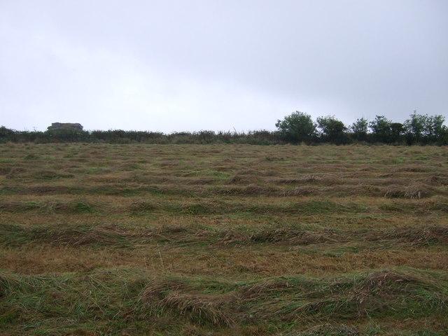 Cut grass field, Black Rock