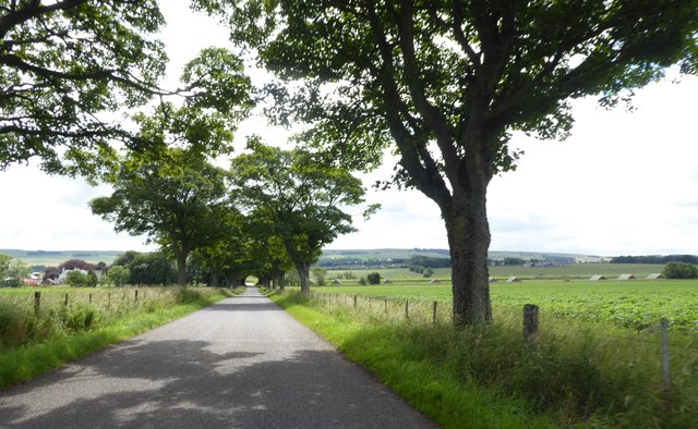 Avenue of widely spaced trees