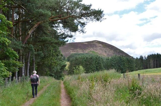 Heading for Eildon Wester Hill