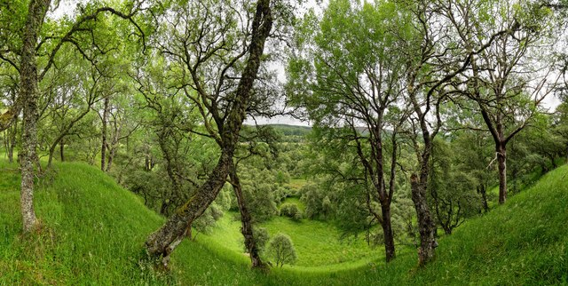 Delliefure Woodland Trail
