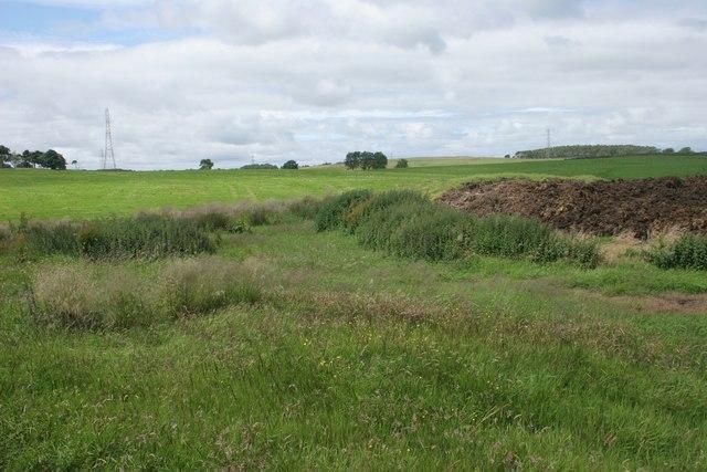Dung heap and nettles