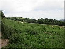 X0194 : Grazing near Curraheen South by Jonathan Thacker