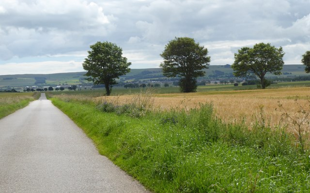 A hedge on the Howe of the Mearns