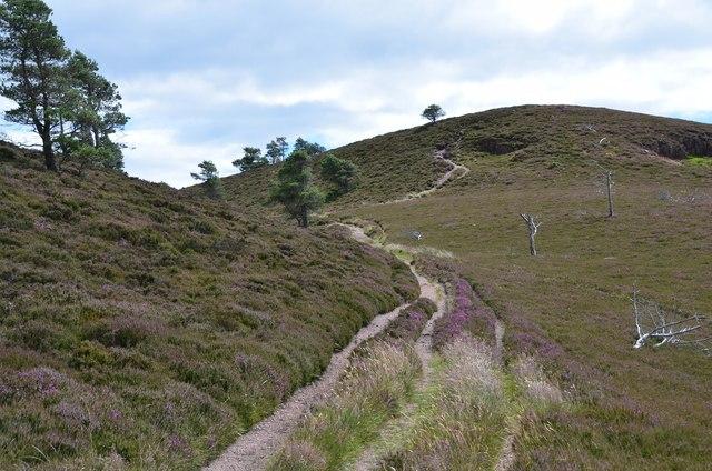 Path on Eildon Wester Hill