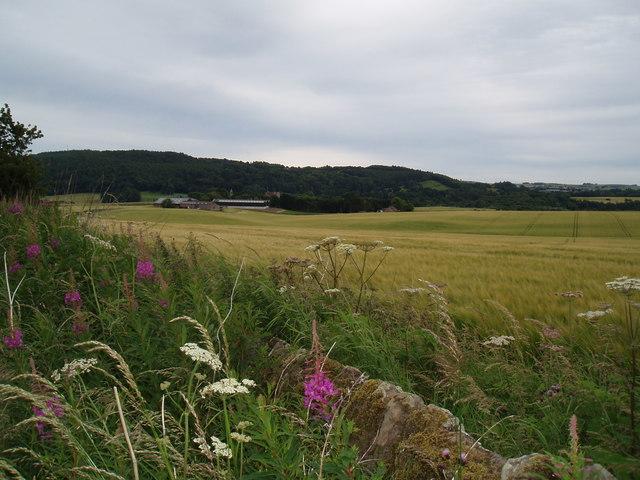 Field at Dairsie Mains