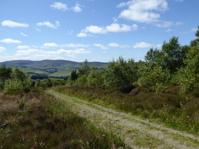 Heather and woodland, Minch Moor