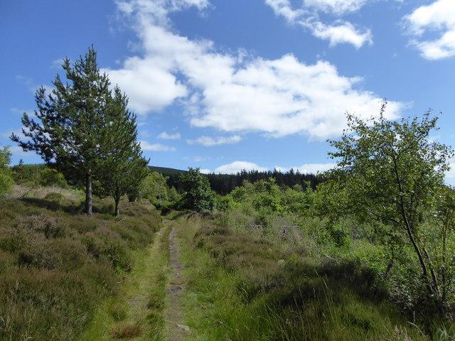 Minch Moor woodlands