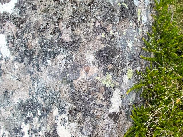 Rivet among the lichen