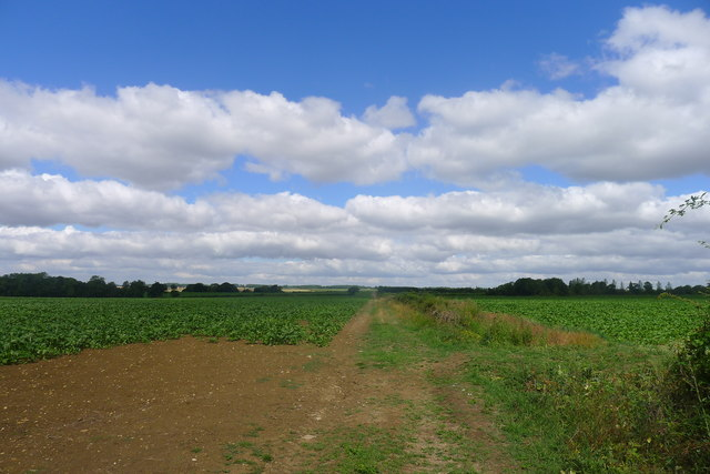Track to Park House Farm