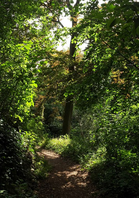 Path, Chapel Hill Pleasure Grounds
