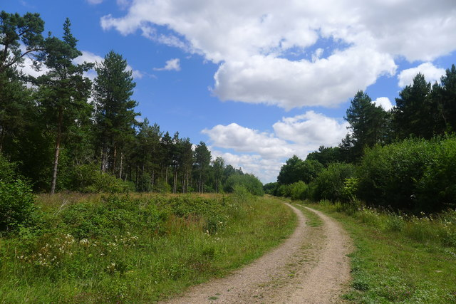 Clipsham Park Wood