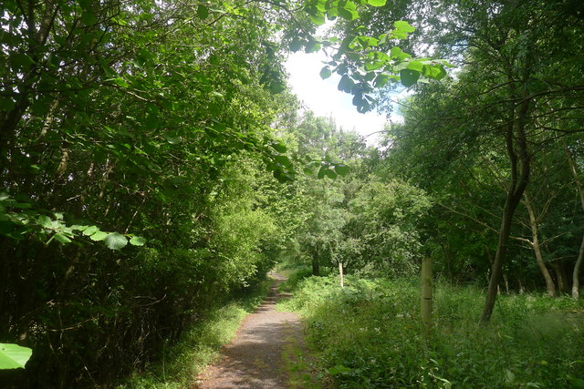 Path at the edge of Morkery Wood