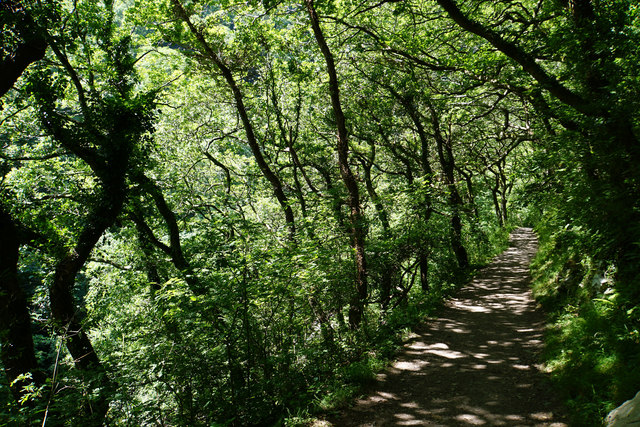 Path in Wester Wood