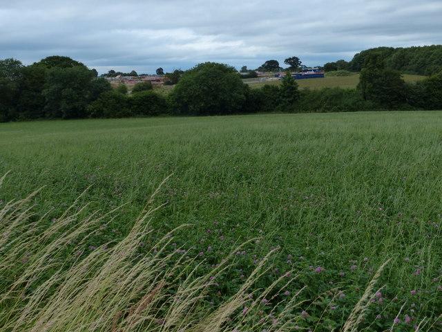 Farmland north of Beggar's Lane