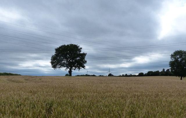 Farmland next to Beggar's Lane