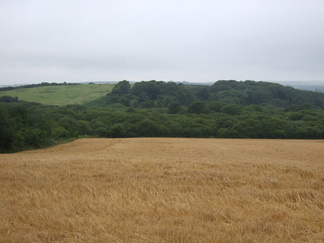 Cereal crop and woodland, Truthwall