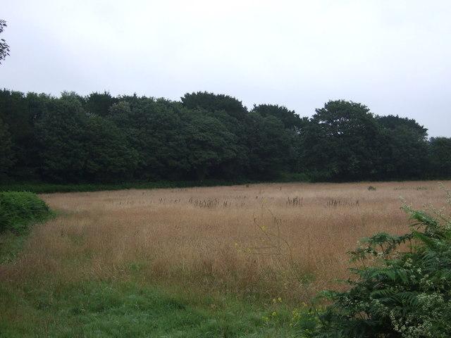 Grassland and woodland near the A394