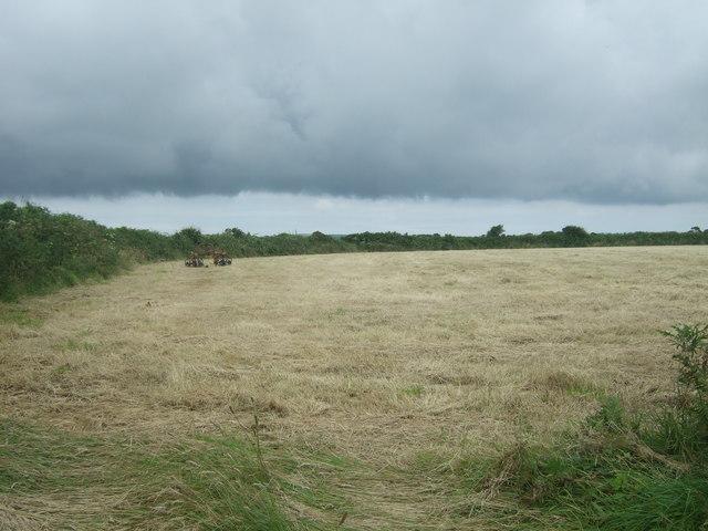 Cut grass field, Sheffield