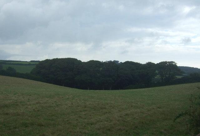 Woodland near Bellowal