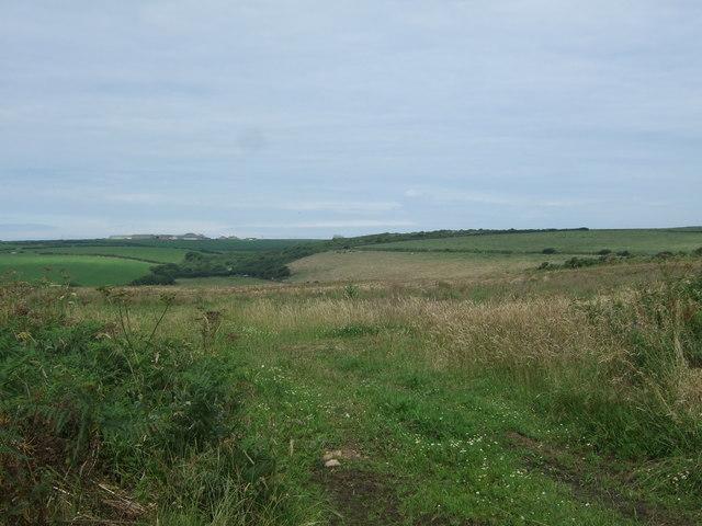 Grassland near Bosanketh Farm