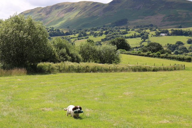 A dog, a busman's holiday by Whitbeck Bridge
