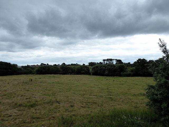 Pasture by Wareham Common