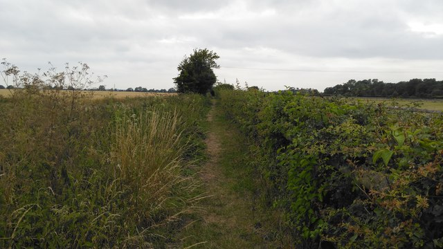Stambridge footpath from the Royal Oak to the Cherry tree