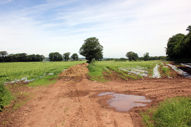 Field at Plas-Brereton Farm