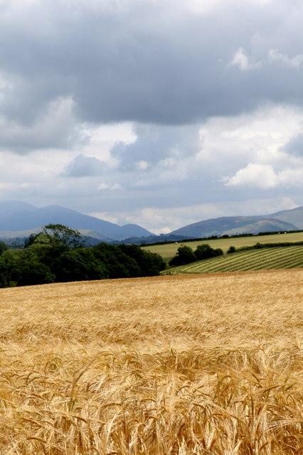 Rich coastal pastures of Cumbria
