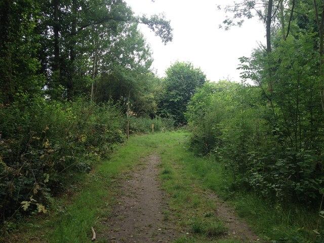 In Rosliston Forest