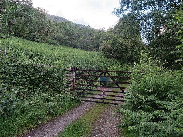 Gate in deer fence