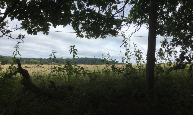 Field near to Great Tangley