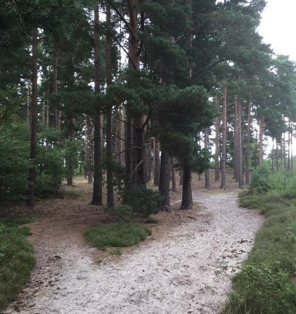 Heathland at Rosemary Hill