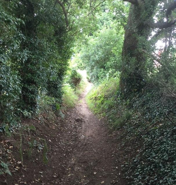 Downslink Trail