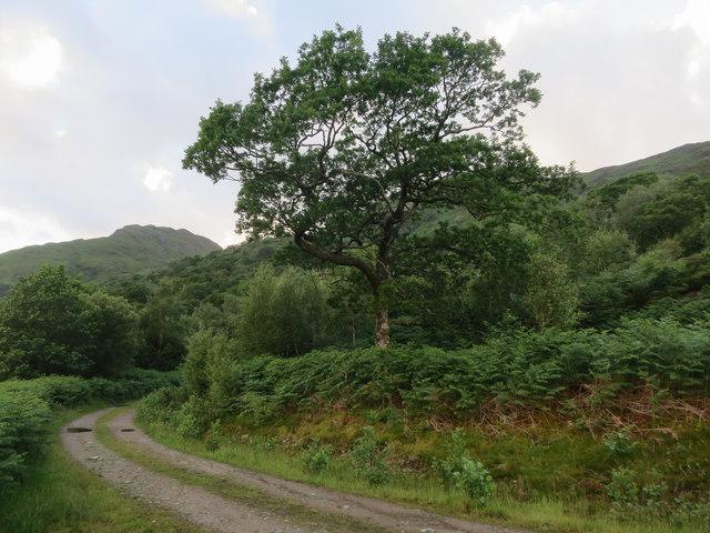 Track by Loch Etive