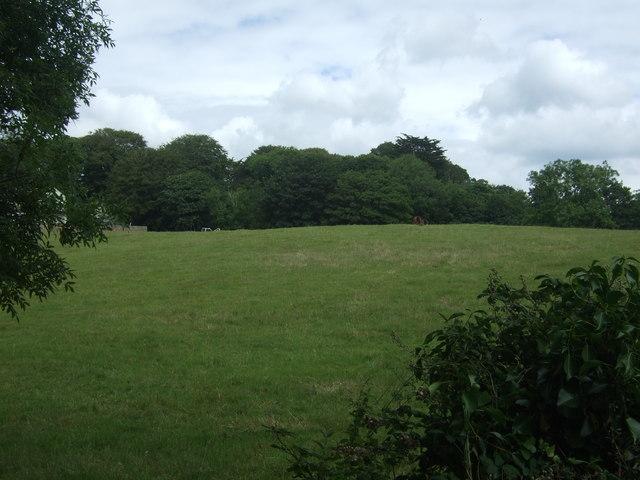 Grazing and woodland near Trereife