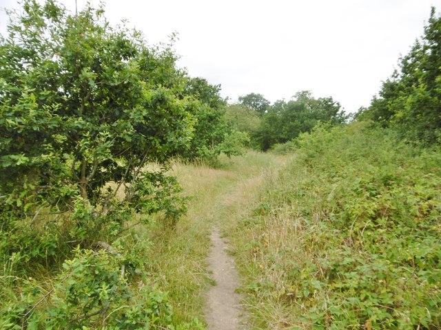 Marchwood, path