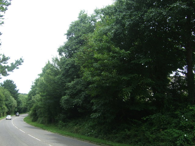 Woodland beside the A30